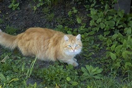 【猫の恩返し】 女性の窮地を救った勇敢な野良猫たちの話!!