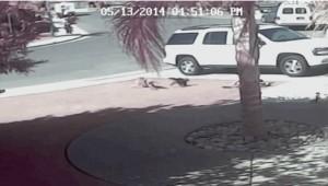 2014_11_23_ネコのタラが野良犬を撃退