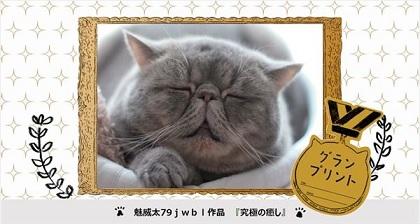 【動画あり】 ブサかわ猫を競うグランプリが開催!!期間限定で山手線の車内に写真が掲載される!!