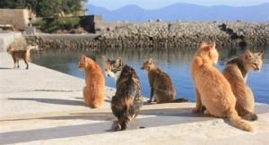 猫の島 『青島』の魅力に迫る!!