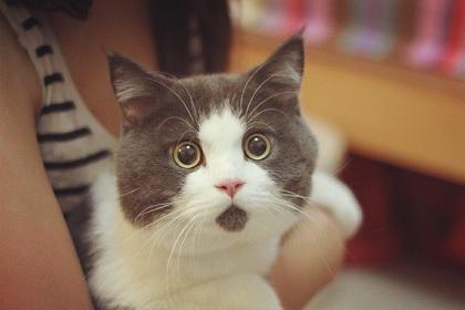 中国の猫ちゃんはいつもビックリした顔つきをしている件