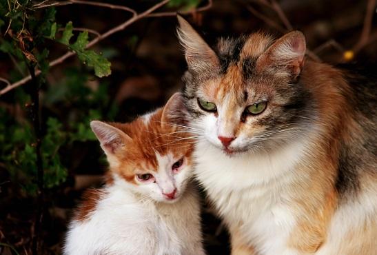 2014_12_26_2匹のネコ