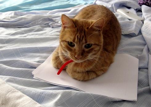 猫が本の上に乗ってくる理由