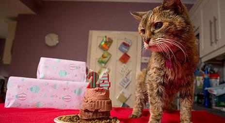 猫で世界長寿!!ギネスに表彰される!!年齢は24歳!!だが以前にはもっと長寿の猫がいた!!