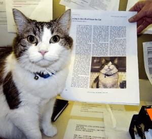 猫が患者の死を察知する!!過去6年間でほぼ的中しているらしい・・・