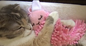 2014_12_12_ネコがぬいぐるみを抱いて寝る姿