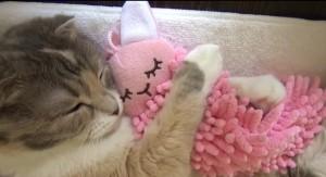 【キュンキュン動画】 猫がウサギのモップを抱きしめて寝る姿が可愛すぎる件