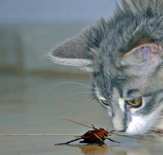 もし猫の名称がゴキブリになってたら 君らは猫を愛せますか!?