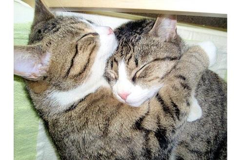猫の愛情表現をまとめてみた!!