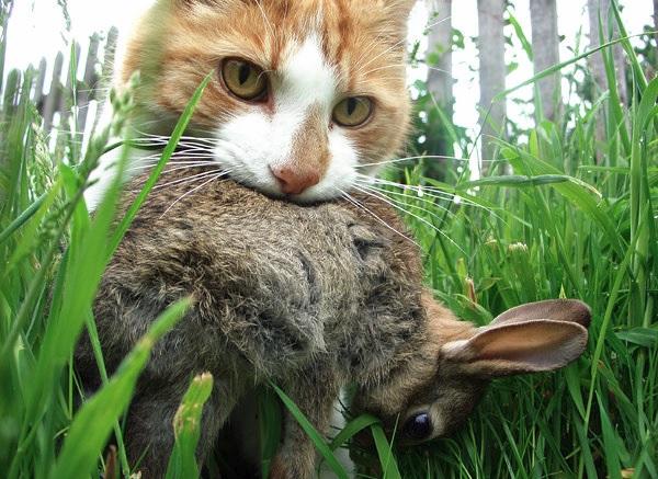 猫が獲物を飼い主に差し出す理由!!あなたの猫ちゃんはどんな獲物を見せてくれますか?