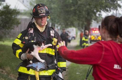 【防災対策】 災害時、あなたの猫はどうしますか?猫と防災について考える