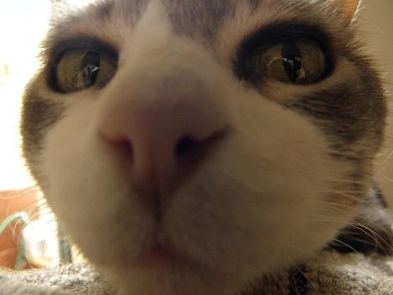 猫の嗅覚は人間の20万倍!?猫の鼻について語る!!