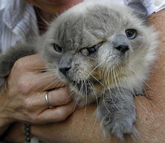 2つの顔を持つ猫 「フランク&ルイ」 ローマ神のヤヌス猫と崇められた猫が安楽死