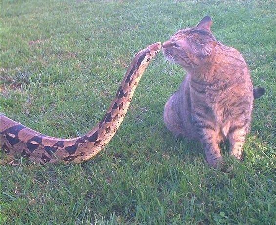 2015_02_23_ネコとヘビ