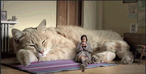 猫は飼い主の事を『大きな猫』と思っているらしい
