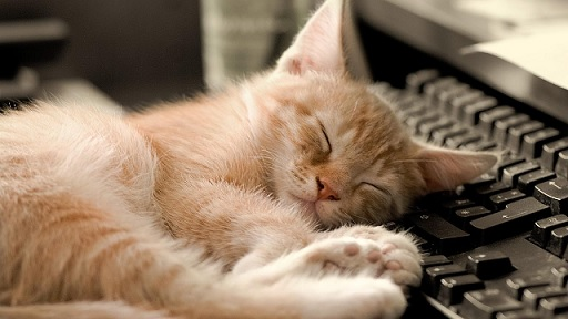 猫と一緒に仕事できる!?ファーレイ株式会社のユニークな求人広告が話題に!!