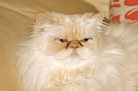 猫の人気名前ランキング!!日本では『ソラ』が1位らしい!!他の国の名前もあるよ!!