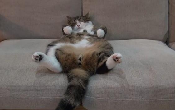 猫がソファーで寝る姿がたまらなくカワイイ(笑)