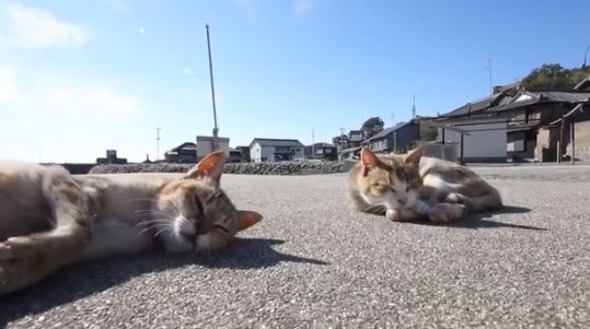 猫の島 『青島』 海外のネットユーザーの反応