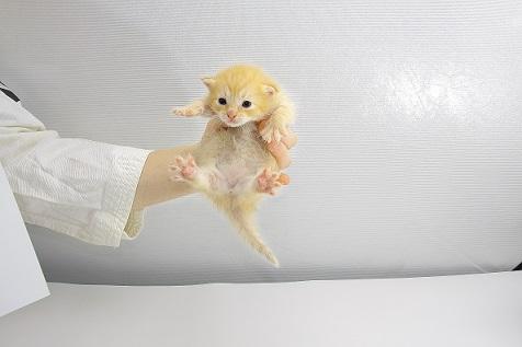 【悲報】 猫を生き埋めにした教師が酷過ぎる!!事件内容を解りやすくまとめてみた