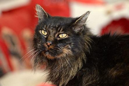 行方不明の猫が突如飼い主のところに!!感動の再開を果たすも口腔腫瘍にかかってたらしい・・・。
