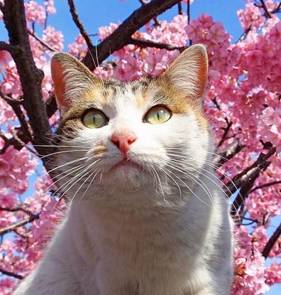上野公園の桜とかわいい猫の写真♪♪桜と猫が見れる桜の名所について語る!!