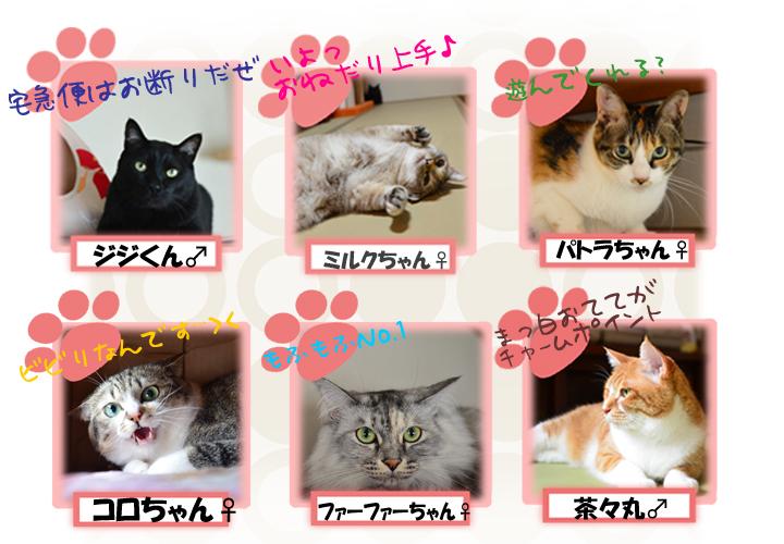 ニャン玉旅館の猫たち