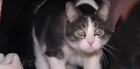 【猫のおもしろハプニング】 我が家の猫に陪審員の呼び出し状が届いた!!