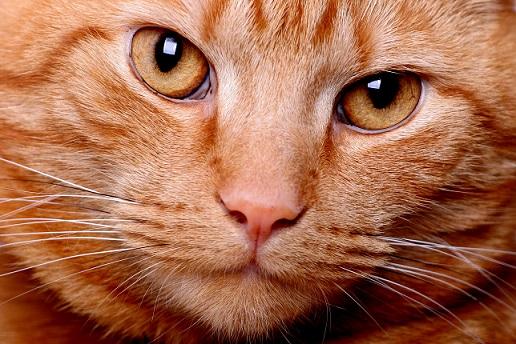 猫は1万年前に中東で飼い慣らされ、そこから世界中に移動したってマジ!?