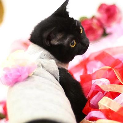 いちのいの宿の猫_ひぐま