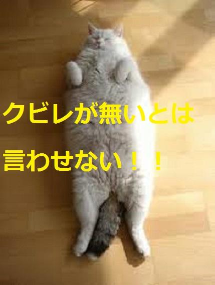 2015_04_24_デブ猫-上から見下ろすと解る