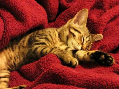 2015_04_22_猫の寝床