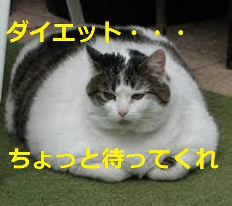 2015_04_24_デブ猫-ダイエットを始めるまえに