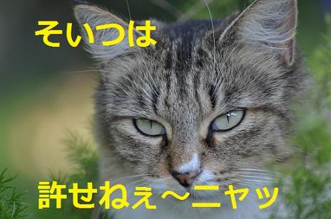 2015_04_28_猫-ゆるせねぇ