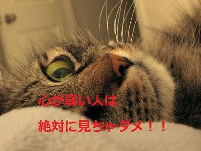 猫を電子レンジでチンした訴訟の真実…心が弱い人は絶対に見ないで!!