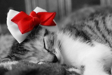 猫の睡眠時間 大人から子供までこれを見れば全てがわかる猫の睡眠メカニズム!!