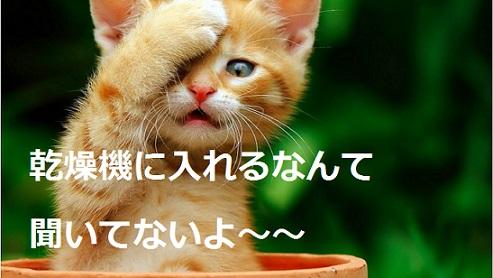 2015_04_28_猫-乾燥機に入れる