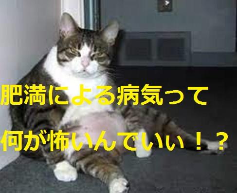 2015_04_24_デブ猫-肥満による病気って怖いの