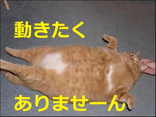 デブ猫を劇的に痩せさせるダイエット方法はこれだ!!これでダメならダイエットはあきらめろ!!