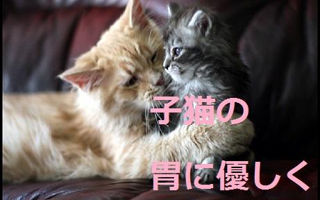 2015_04_30_猫-子猫の胃に優しく