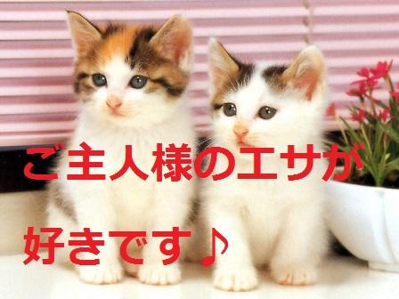 2015_04_30_猫-ご主人様のエサが好き