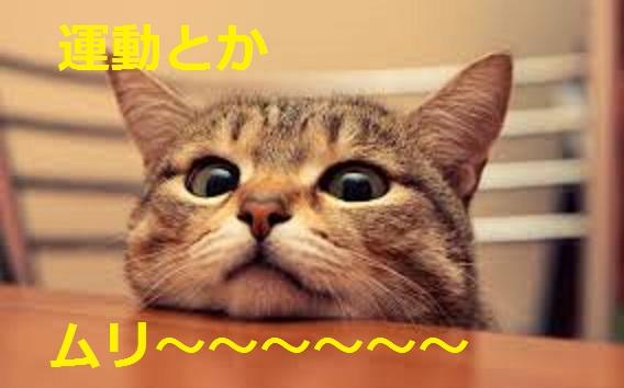 2015_04_24_デブ猫-運動はムリゲーです