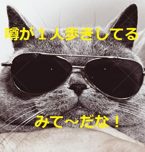 2015_04_28_猫のブラックジョーク