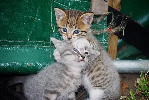 2015_04_22_猫は複数飼うとストレスをためる