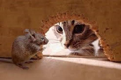 2015_04_14_鼠を狙う猫