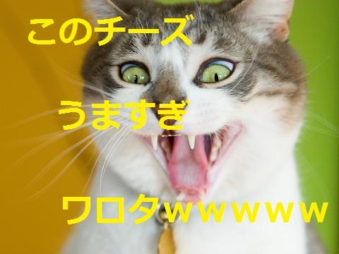 2015_04_30_猫-チーズうますぎ