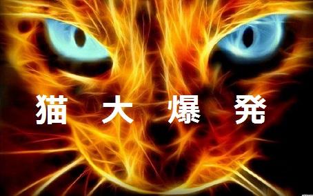 2015_04_28_猫-大爆発