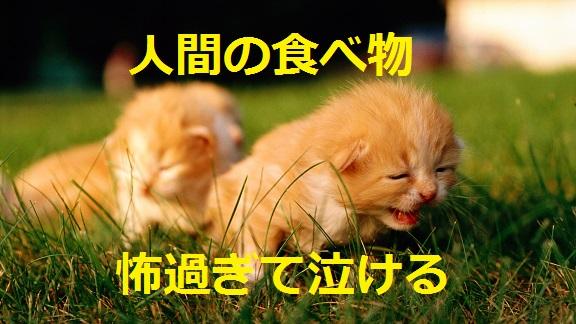 2015_04_30_猫-人間の食べ物怖過ぎて泣ける