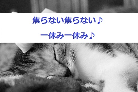 猫-焦ってブラッシングしない
