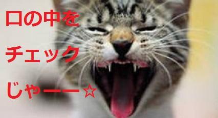 2015_05_04_猫-口の中をチェック